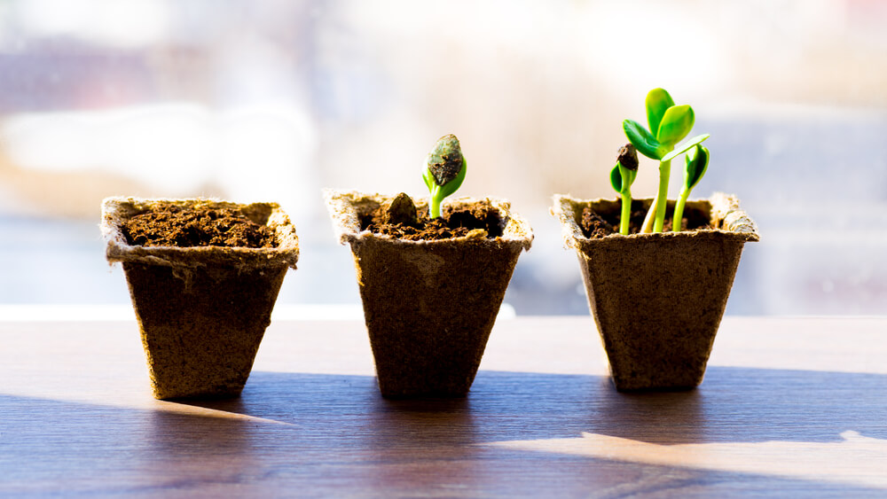 3-potted-plants-demonstrating-their-growth-comparing-to-drip-campaigns